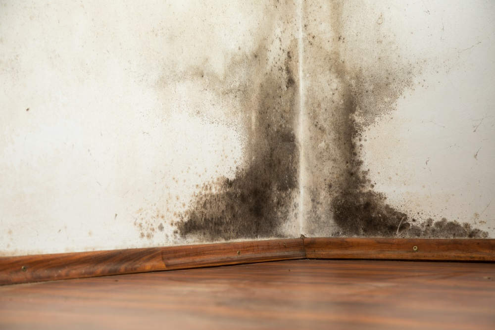 Black mould on walls